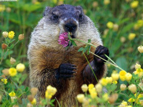 groundhog day where to iiiiiiiiit ssssss groundhog s day the sound of emceekhan