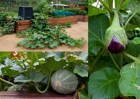 vegetables for home garden keep your home garden monsanto free the sleuth journal
