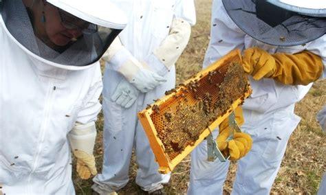 o 249 trouver une formation en apiculture
