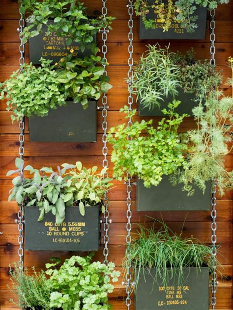 hanging wall garden succulents hops and more plants in millennial gardens