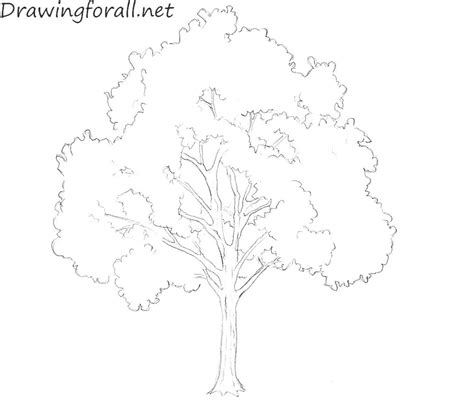 how to draw tree pictures how to draw a tree for beginners drawingforall net