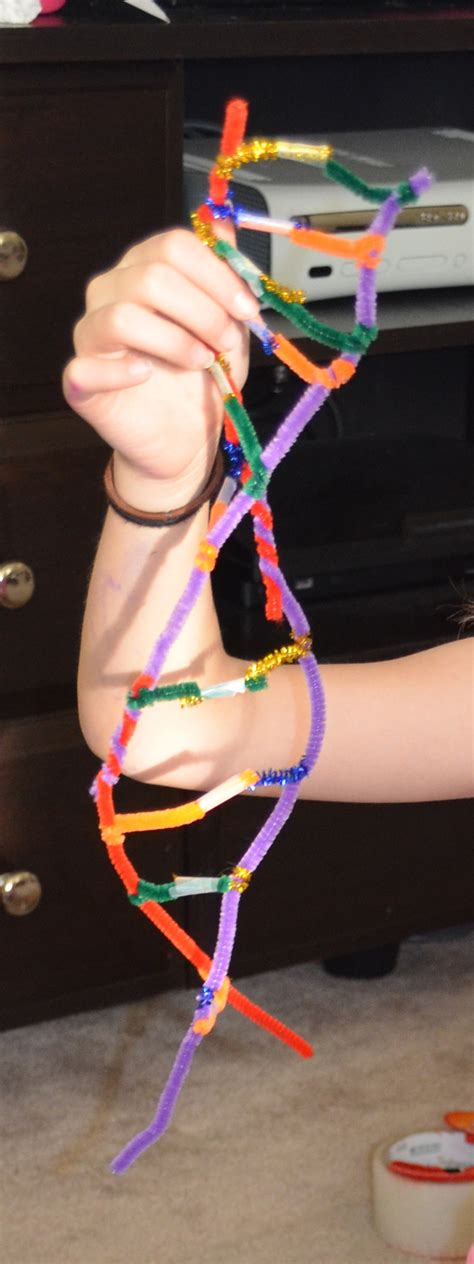 dna model using pipe cleaners and dna model with pipe cleaners diy