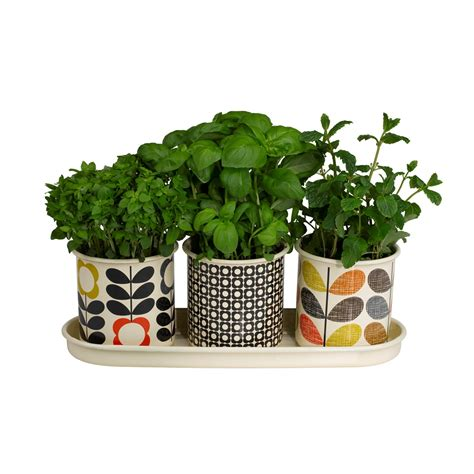 herb pot orla kiely set of 3 herb plant pots kitchen gifts