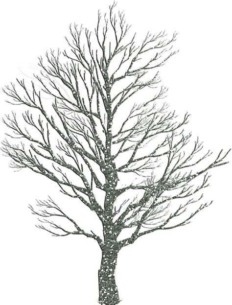 how to draw tree pictures how to draw winter trees 10 pics how to draw in 1 minute