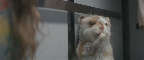 Kia Soul Hamster Commerical by Baby Hamster Escapes From Hospital In Kia Soul Turbo
