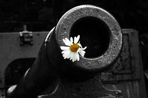 hope captivating minimalist plant photos