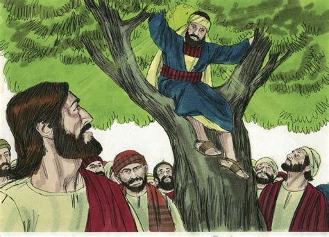 tree and jesus bible for zacchaeus