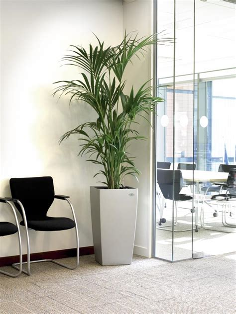 plants for the office bring the outdoors in whitespace consultants