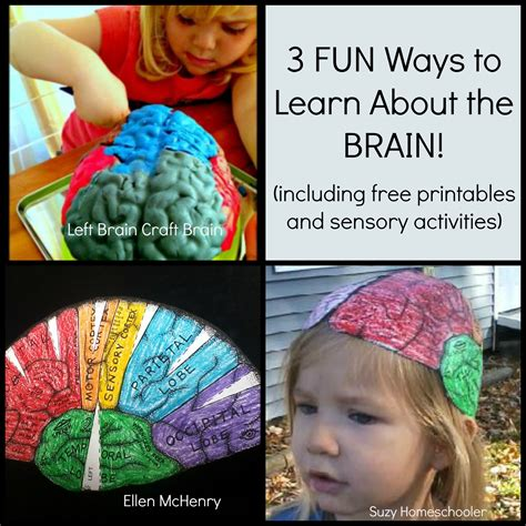 brain craft for 3 ways to learn about the brain suzy homeschooler