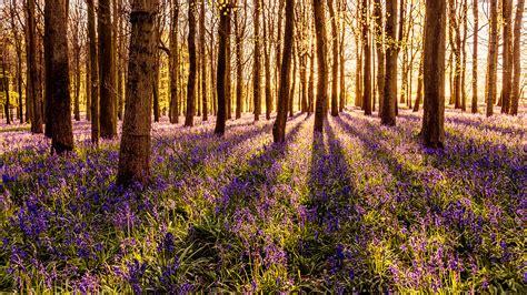 Der Garten Der Toten Bäume by Die 61 Besten Sch 246 Ne Hintergrundbilder Der Natur Und Des