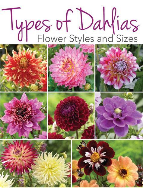 garden flower types 25 best ideas about dahlia flowers on unique