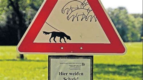 Leinenzwang Englischer Garten München by Erste Schilder Fordern Leinenzwang F 252 R Hunde Stadt
