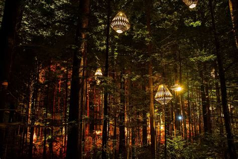 rotorua lights redwoods nightlights redwoods treewalk rotorua