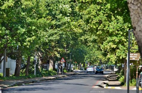 oak tree rubber st dorp is the wagon road from stellenbosch to