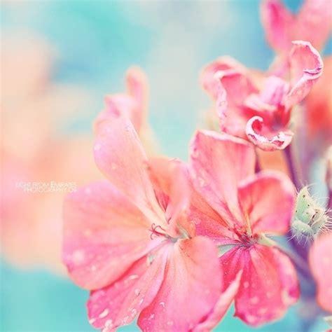 light flowers pink flower by light from emirates on deviantart