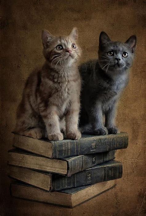 cat picture book cats on books pixdaus