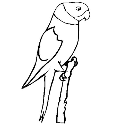 parrot coloring page animals town animals color sheet