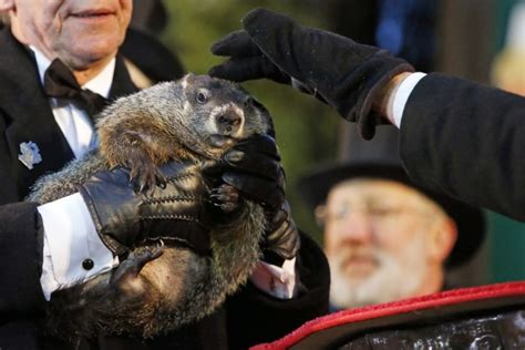 groundhog day run six more weeks of winter groundhogs differ on forecasts