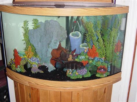 aquarium decoration ideas freshwater saltwater fish tank maintenance decoration ideas 2017