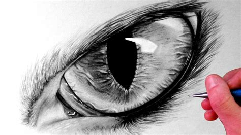 how to draw a eye how to draw a cat eye