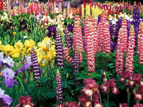 gardens with flowers growing the best flowers in town landscaping gardening