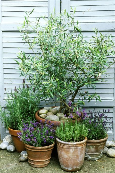 small potted trees 25 best ideas about trees in pots on potted