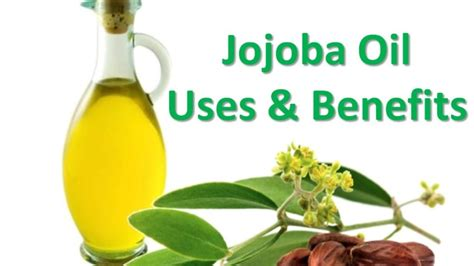 jojoba benefits how to use jojoba for hair and scalp