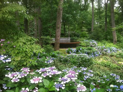 botanical gardens atlanta perkins will selected to design botanical gardens