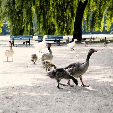 Frauenarzt Englischer Garten München gaense frauenarzt muenchen praxisgemeinschaft am