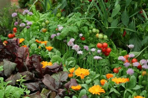 companion flowers for vegetable garden 10 flowers to grow with vegetables peak prosperity