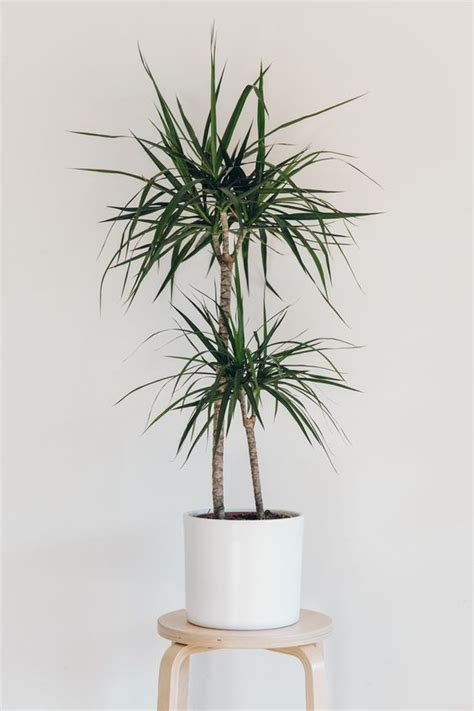 houseplants that don t need sunlight 10 houseplants that don t need sunlight leedy interiors