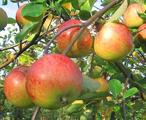 Wo Liegt Der Garten by Die Geschichte Vom Ur Apfel Liegt Der Garten In
