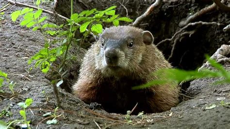 groundhog day where to groundhog day 2018 hd