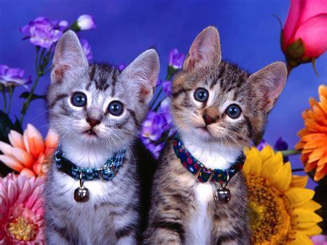 tree at katten achtergronden hd wallpapers