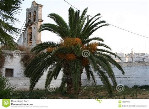 trees in italy palm tree in italy stock photo image 46397324