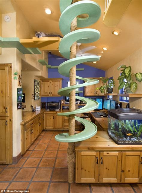 cat paradise california with 18 cats remodels his home into an
