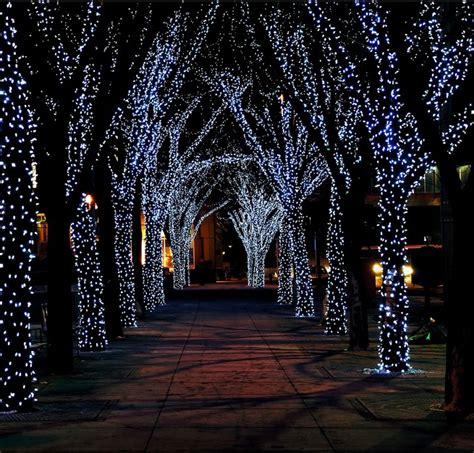 outside tree lights outside trees