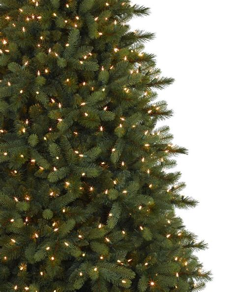 noble fir tree pictures collection noble fir trees pictures best