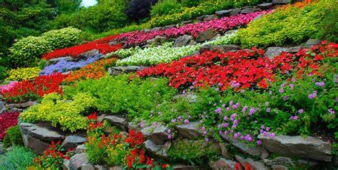 starting a flower garden starting a flower garden the landscape market