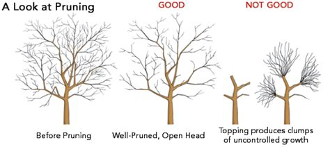 how to clean tree late winter pruning clean