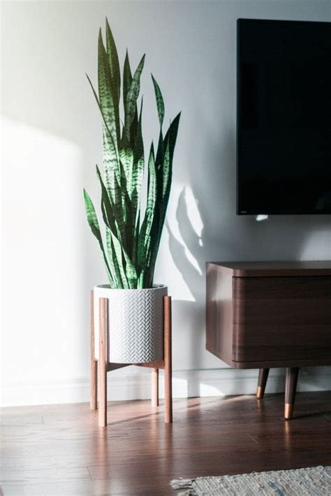 modern plants indoor 25 best ideas about indoor plant stands on