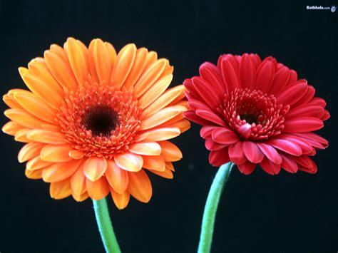 flower images vibrant flowers wallpaper 248215 fanpop