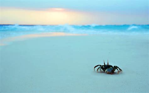 the sea to the sea crab wallpaper eveevesw