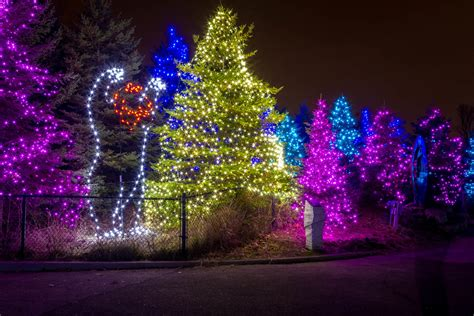 lights detroit zoo lights at the detroit zoo hamish carpenter photography