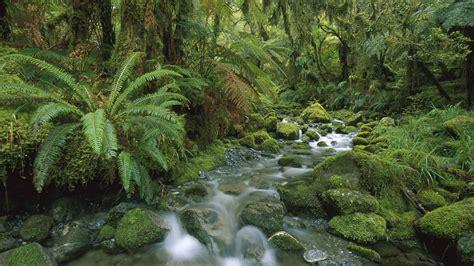 Der Garten Der Toten Bäume by Die 50 Besten Dschungel Hintergrundbilder