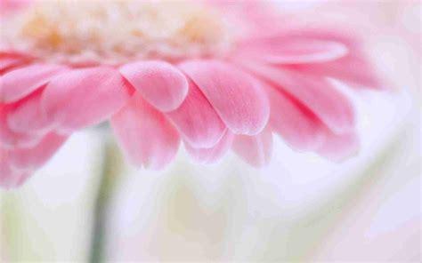 light flowers flowers background wallpaper 1600x1200 83354