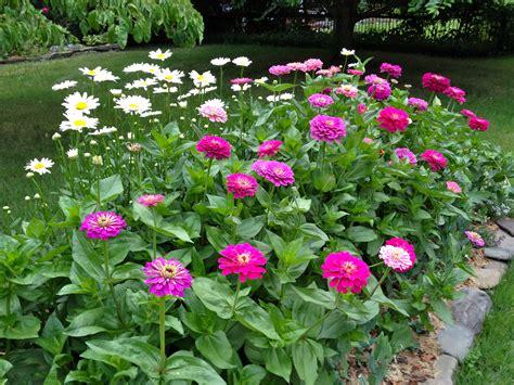 zinnia flower garden benary zinnia best flower a must for