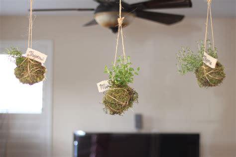 modern plants indoor modern indoor house plants modern house