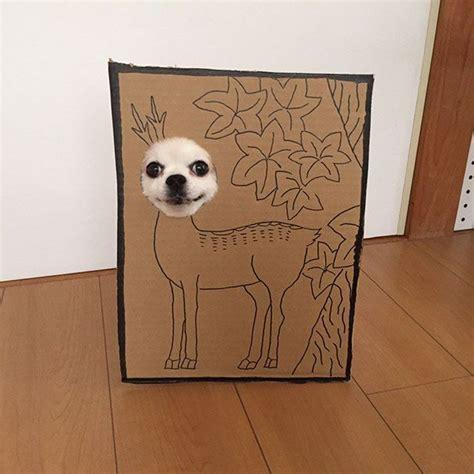 pakai cat apa anjing dari kardus yang murah meriah tapi gak