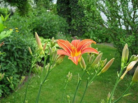 Der Garten Meiner Großmutter by Buch Kultur Und Lifestyle Gartenb 252 Cher Und Gartenzubeh 246 R